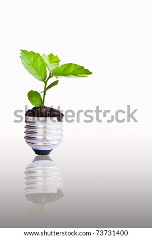 Green plant growing up through light bulb, can be used for go green concept - stock photo