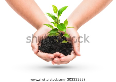 Green plant in a child hands isolated on white - stock photo