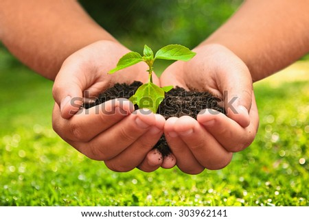 Green plant in a child hands on natural background - stock photo