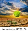 green plant in a dry earth - stock photo