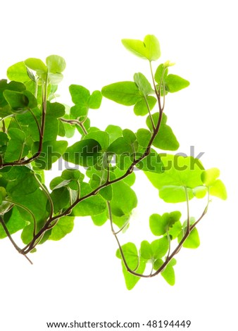 Green plant in a pot - stock photo