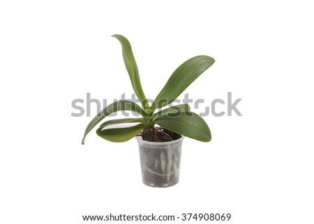Green plant in a pot. Isolated on white. - stock photo