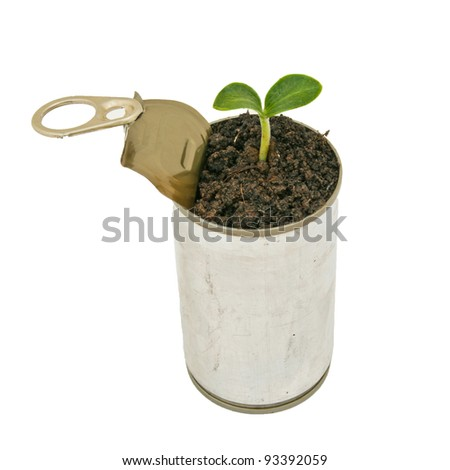 Green plant in can isolated on white background