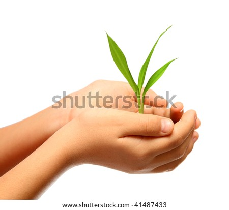 green plant in children hands isolated on white - stock photo