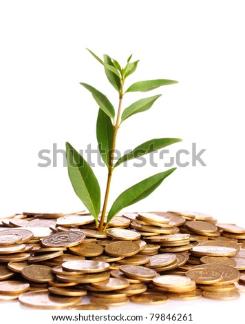 Green plant in coins isolated on white. Ukrainian coins