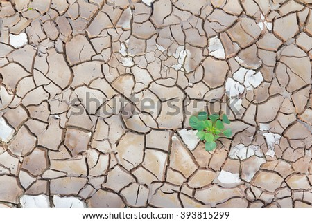 Green plant in cracked land