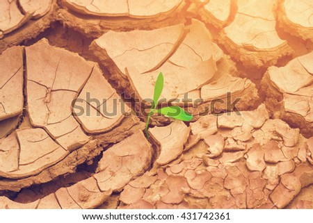 Green plant in dried earth with sunlight