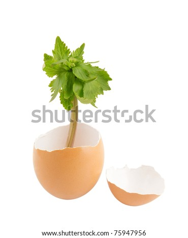 Green plant in egg isolated on white background - stock photo