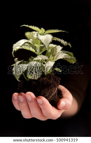 Green plant in female hands on black background - stock photo