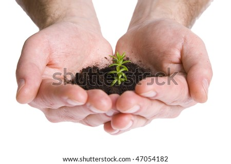 Green plant in hands isolated on white