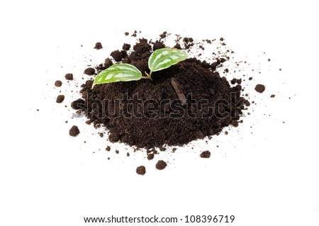 Green Plant in Pile of Soil Isolated on White Background - stock photo