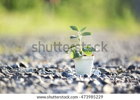 Green plant in pot on crushed gray stone floor, blur bokeh background