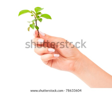 Green plant in the hand on white background - stock photo