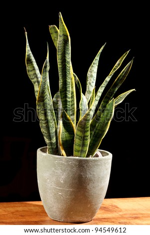 green plant in the pot - stock photo