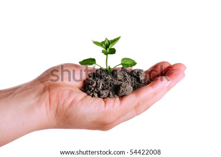 Green plant in the soil on the white background