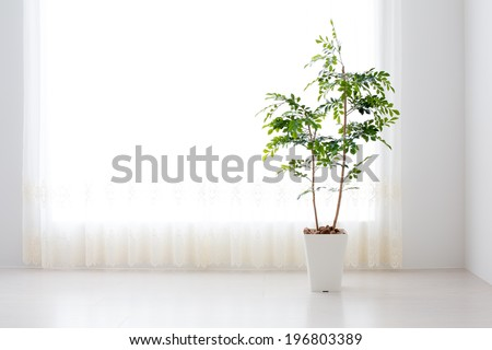 green plant in the sunny white room - stock photo