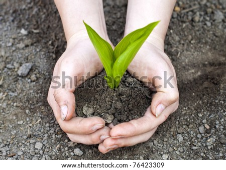 Green plant in woman hands - stock photo