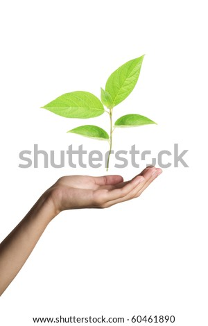 green plant in woman hands isolated on white - stock photo