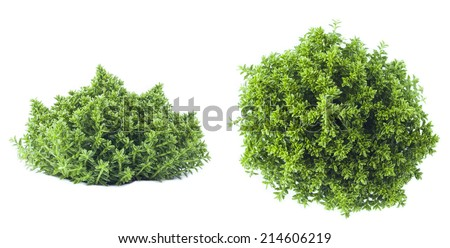 green plant isolated on white background - stock photo