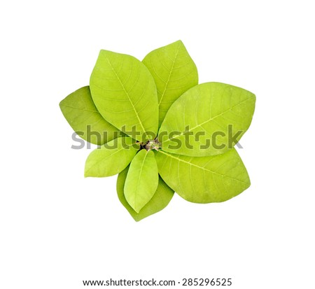 Green plant isolated over white. Green leaves over white background - stock photo