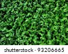 green plant leaf - stock photo