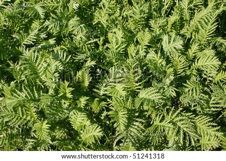 Green plant leafs texture as background. - stock photo