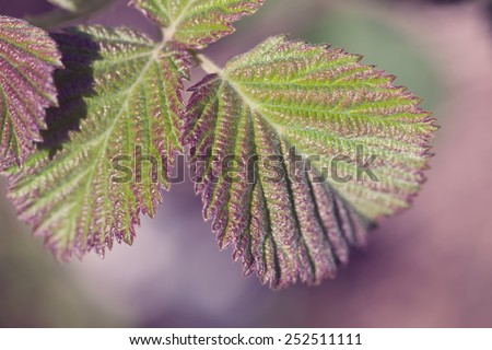 Green plant leaves. Image stylized with cross-process - stock photo