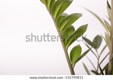 Green plant leaves on white background