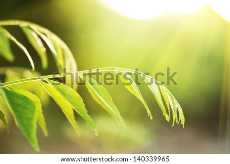 Green plant leaves over sunshine summer background. Copyspace. - stock photo
