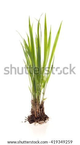 green plant on a white background - stock photo