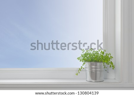 Green plant on a window sill, in a modern home, with blue sky seen through the window. - stock photo