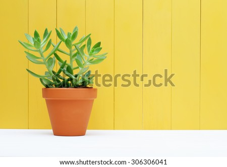 Green Plant on a Yellow Colored Wall Background - stock photo