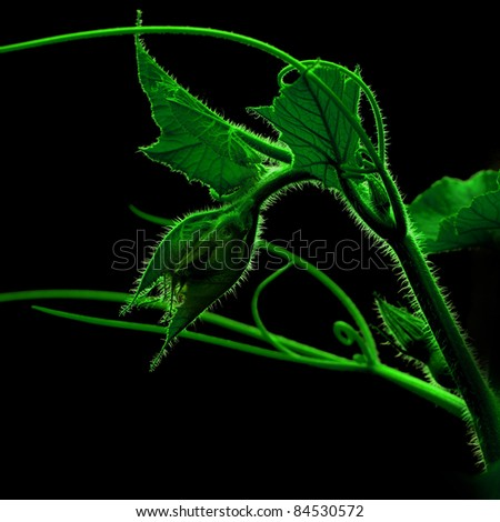 green plant on dark background - stock photo