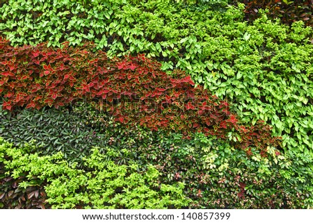 Green plant on wall - stock photo