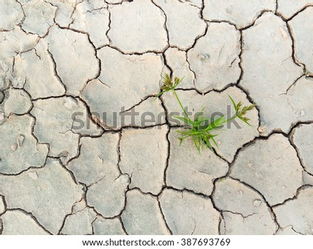 Green plant only one on soil arid, Cracked dried ground, Water shortage, Global warming, Water scarcity, Water crisis - stock photo