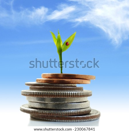 Green plant shoot with ladybug growing from coins                                - stock photo