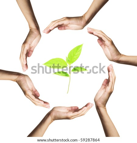 green plant surrounded by hands - stock photo