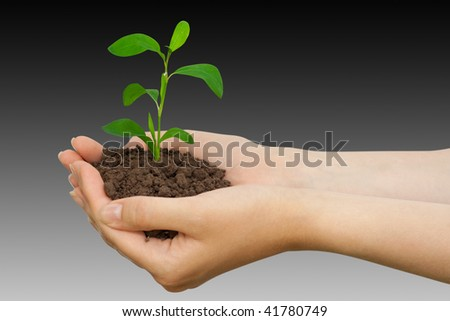green plant with a ground in palms of hands
