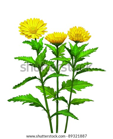 Green plant with big yellow flowers - stock photo