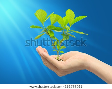 Green plant with blue background - stock photo