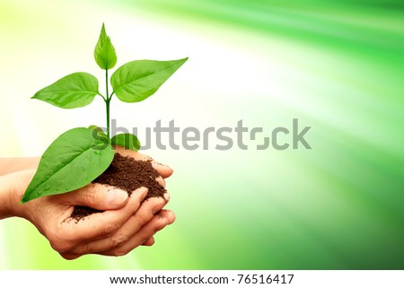 Green plant with green background
