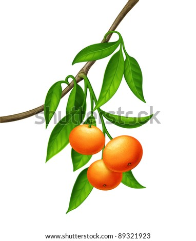 Green plant with orange - red fruits - stock photo