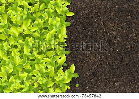 Green plant with small leaves, depending on soil fertilizer. - stock photo