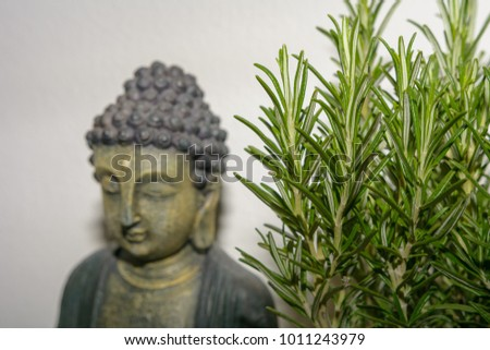 Green plant with unfocused Buddha statue in background