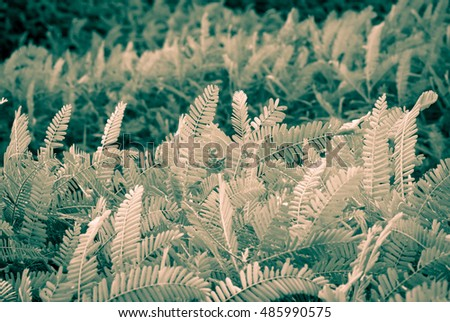 Green plant with wind at outdoor, Vintage color style