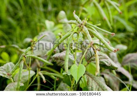 Green plants. - stock photo