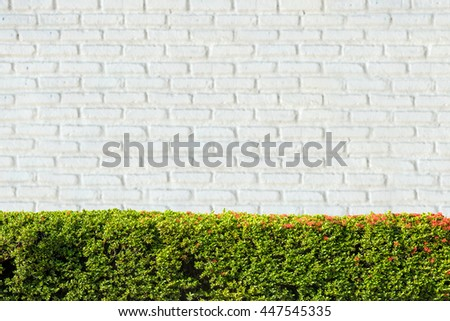Green plants and blurred white brick wall background. - stock photo