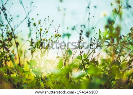 Green plants and nature with sun rising in the back - stock photo