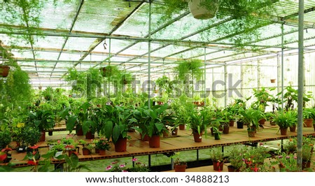 green plants at the garden - stock photo