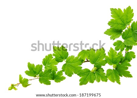 Green plants background. - stock photo